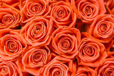 valentine s day: A bunch of orange roses background