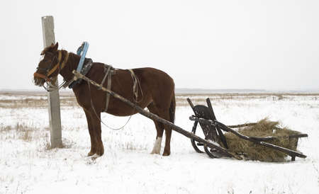 horse sleigh: horse and sleigh in nothern Kazakhstan