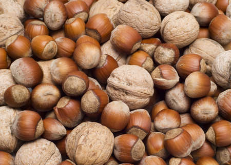 close-up view of hazelnuts and walnuts Stock Photo - 2392082