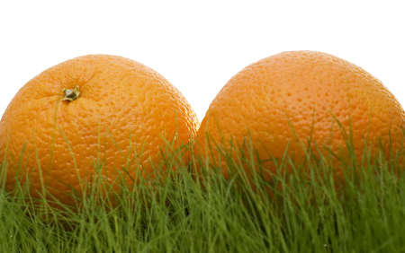 oranges on grass isolated over white photo