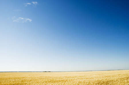 a blue sky and field Stock Photo - 3372445