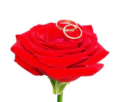 red rose with a wedding rings isolated on white Stock Photo - 3518224
