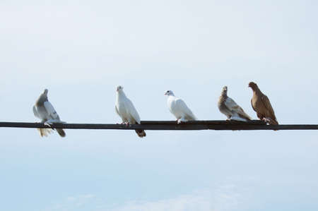 doves on a plank over sky background photo