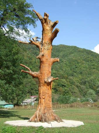 old oak in Krasnaya Polyana, Sochi, Russia photo