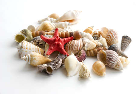 sea cockleshells on a white background photo