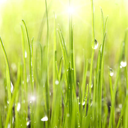 glint: dew drops on bright green grass