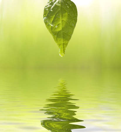 groen blad met dauwdruppels Stockfoto