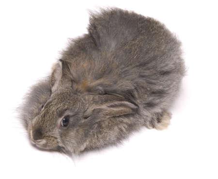 funny rabbit isolated on white photo