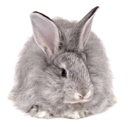 coward: cute rabbit