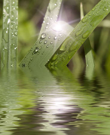 fresh green grass reflected in water photo