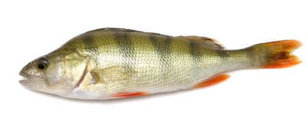 perch isolated on white background Stock Photo - 5594120