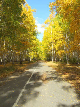 allegheny: road in an autumn forest