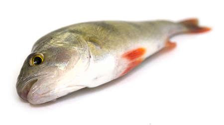 fresh fish isolated on white Stock Photo - 5617975