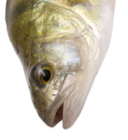 head of fish isolated on white Stock Photo - 5617974
