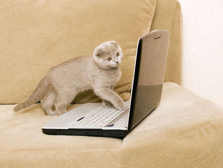 cat and laptop on a sofa photo