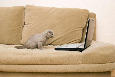 Katze und Laptop auf einem sofa