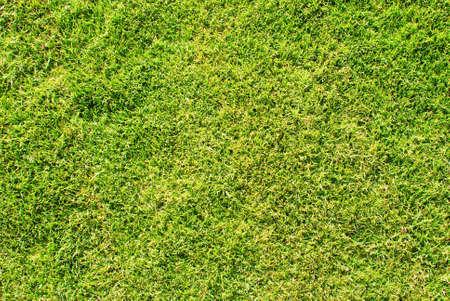 grüne Gras groß als Hintergrund