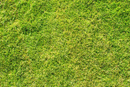 groen gras grote als achtergrond Stockfoto