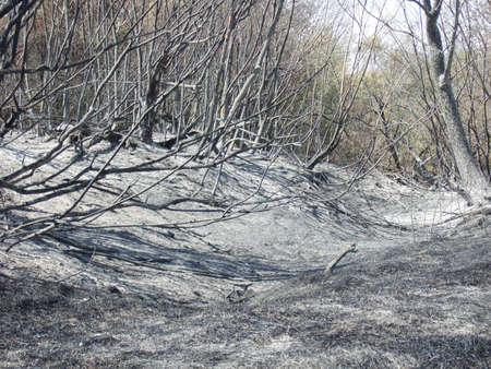 suffocating: foresta dopo l'incendio