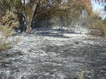 suffocating: forest after fire