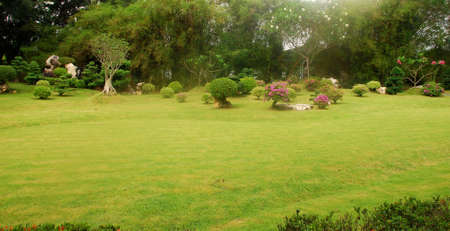 beauty park with lawn photo