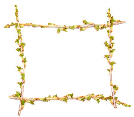 vine border: spring twig frame isolated on white