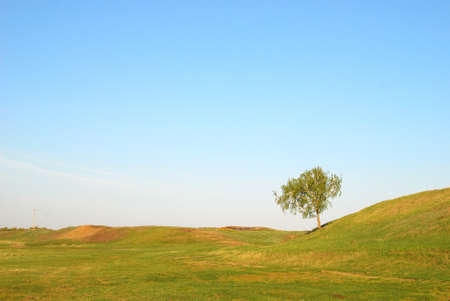 tree in green field against sky background Stock Photo - 9645734
