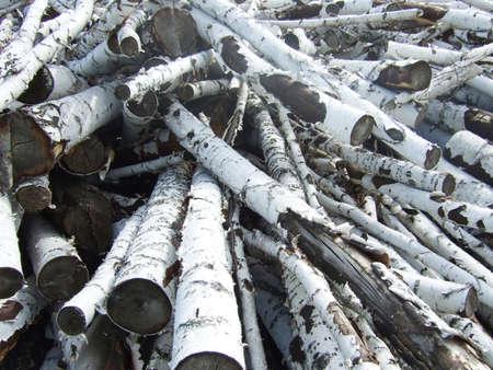 sawed: pile of birch logs Stock Photo