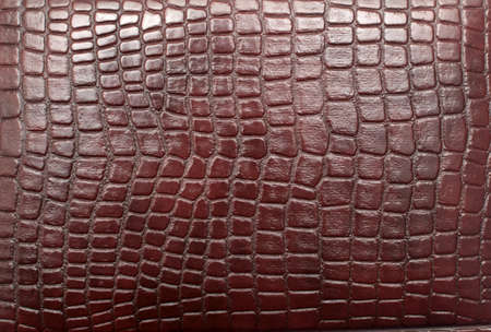 close up of reptile leather photo
