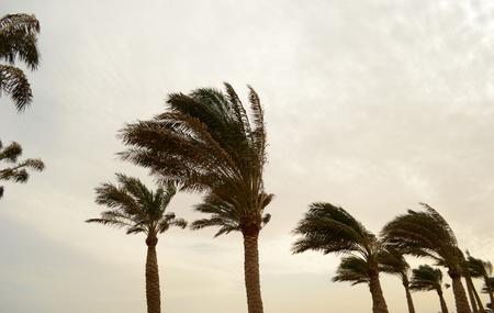 Hurrikan Lizenzfreie Bilder