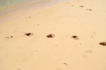 footprints in wet sand photo
