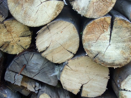 Pile of wood logs Stock Photo - 13869785