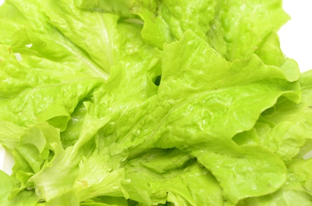 Fresh salad lettuce isolated on white  photo