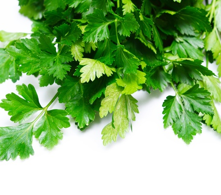 parsley on white photo