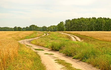 two roads in field photo