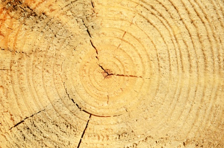close up of tree stump photo