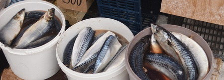 fish in market photo