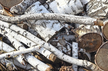 sawed: pile of birch firewood