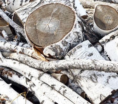 woodpile: pile of birch firewood