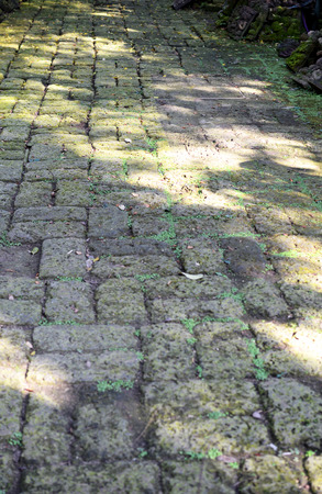 old pavement in the garden photo