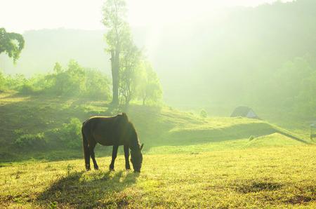 horse against sunrise photo