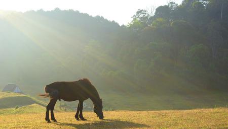 horse on pasture at sunset photo