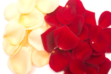 rose petals isolated on white background photo