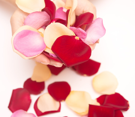 woman hands with rose petals photo