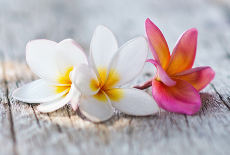 flower background: plumeria flowers on a wooden background