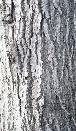 rough bark background photo