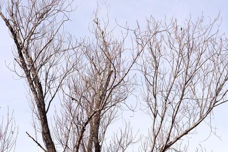 barren: barren tree against sky background Stock Photo