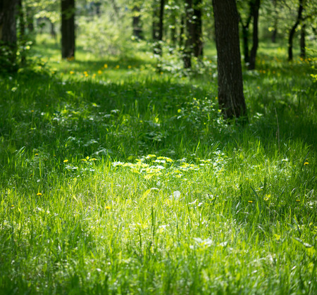 summer forest with sunny glade Stock Photo