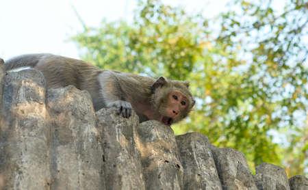 agape: angry monkey Stock Photo