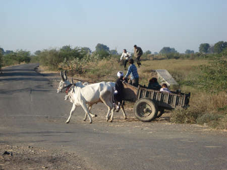 india cow: Bullock cart in rural India Stock Photo